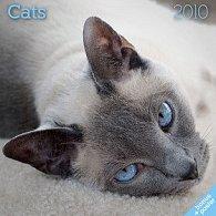 Kočky 2010 - nástěnný kalendář