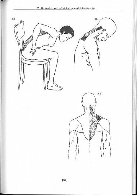 Náhled Funkční diagnostika pohybového aparátu