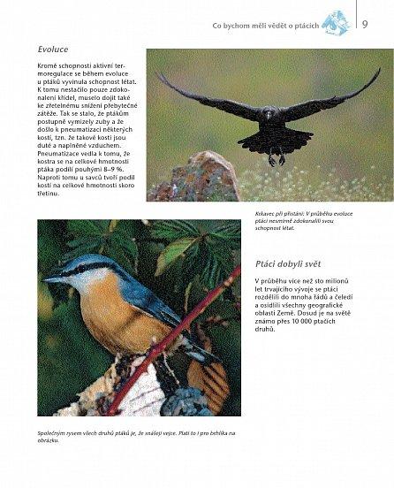Náhled Ptáci v zahradě