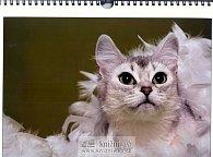 Kalendář Kočky 2009
