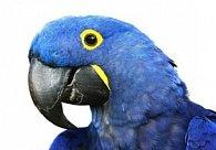 Pohlednice 3D čtverec movie papoušek modrý