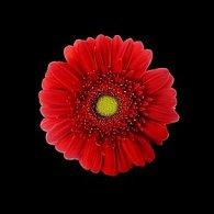 Pohlednice 3D čtverec květina červená