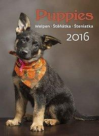 Kalendář nástěnný 2016 - Štěňátka - Puppies