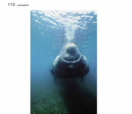 Náhled Na svou první velrybu - nikdy nezapomeneš