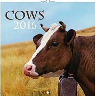 Kalendář nástěnný 2016 - Krávy, poznámkový  30 x 30 cm