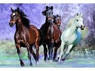 Puzzle Cválající koně 1000d