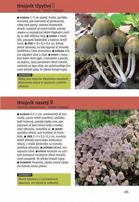 Náhled Určujeme houby - 340 druhů středoevropských hub
