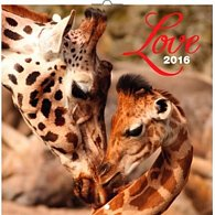 Kalendář nástěnný 2016 - Love - rodiny zvířat, poznámkový  30 x 30 cm