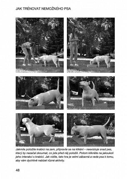 Náhled Jak trénovat nemožného psa