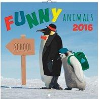 Kalendář nástěnný 2016 - Funny Animals, poznámkový  30 x 30 cm