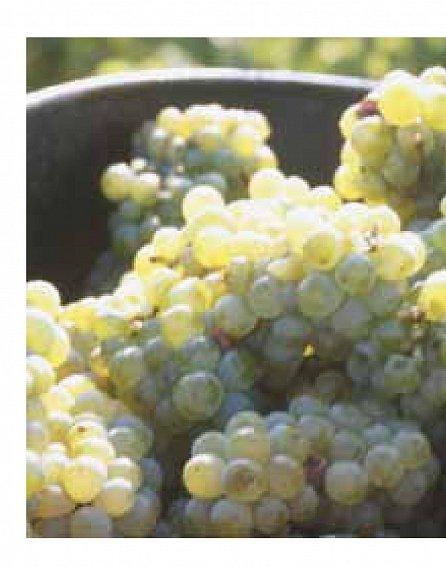 Náhled Malá škola degustace vína