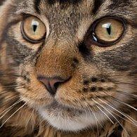 Pohlednice 3D čtverec kočka hlava