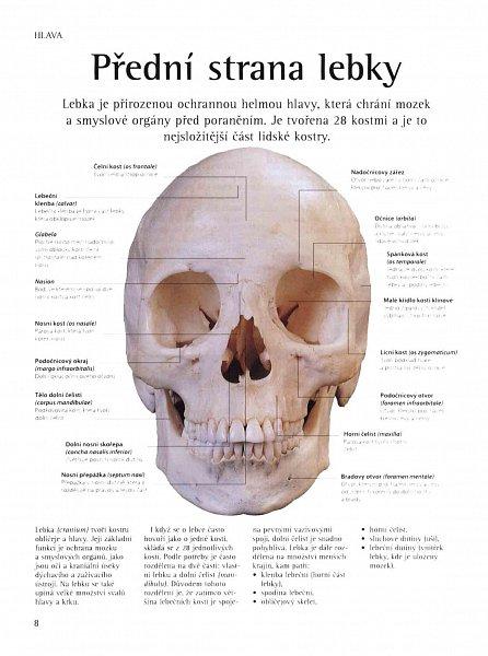 Náhled Lidské tělo - Ilustrovaný průvodce