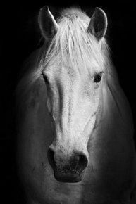 Pohlednice 3D kůň bílý
