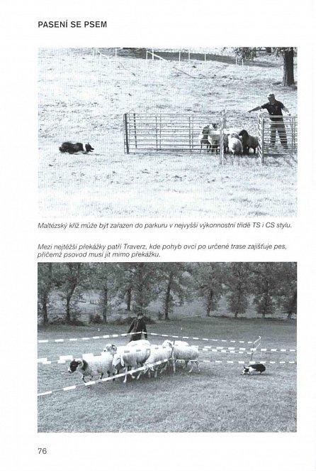 Náhled Pasení se psem - Sport, práce i zábava (nejen) pro každou borderku