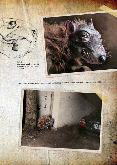 Náhled Senzační sbírka zvířat doktora Proktora
