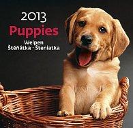 Kalendář nástěnný 2013 - Puppies
