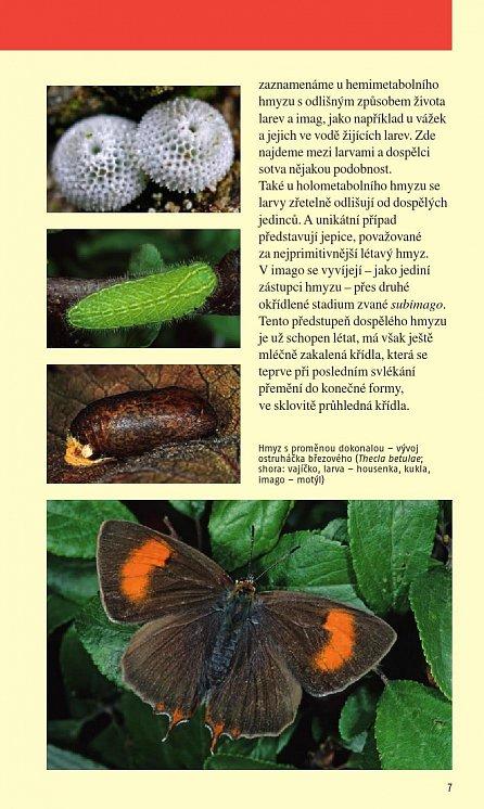 Náhled Hmyz - Nový průvodce přírodou