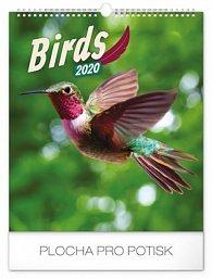 Kalendář nástěnný 2020 - Ptáci, 30 × 34 cm