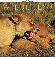 Kalendář 2014 - Wildlife Jakub Kasl - nástěnný poznámkový (ANG, NĚM, FRA, ITA, ŠPA, HOL)