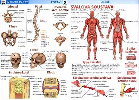 Náhled Lidské tělo 1 - Naučné karty