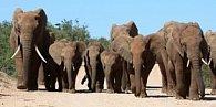 Záložka 3D sloni
