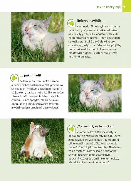 Náhled Co má kočka na mysli