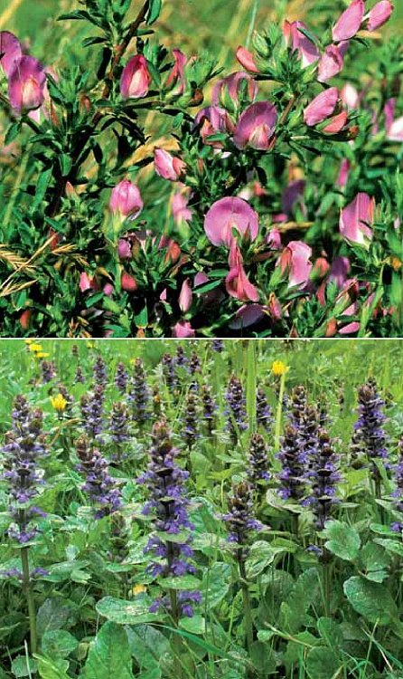 Náhled Jedlé rostliny v přírodě