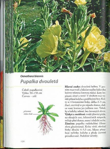 Náhled Naše léčivé rostliny
