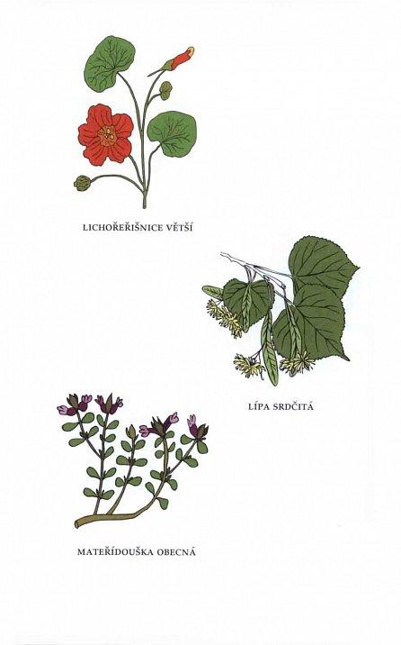 Náhled Bylinky - Léčivá moc přírody