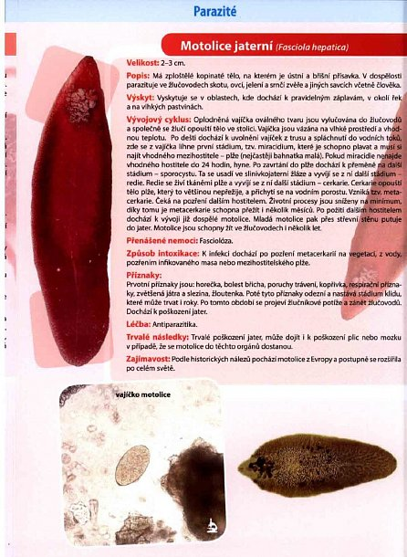 Náhled Parazité - Naučná karta