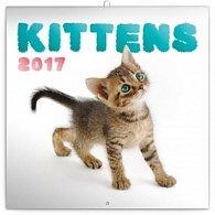 Kalendář poznámkový 2017 - Koťata