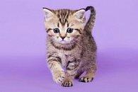 Pohlednice 3D kotě mourovaté