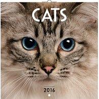 Kalendář nástěnný 2016 - Kočky, poznámkový  30 x 30 cm