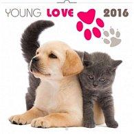 Kalendář nástěnný 2016 - Young Love - koťata & štěňata, poznámkový  30 x 30 cm
