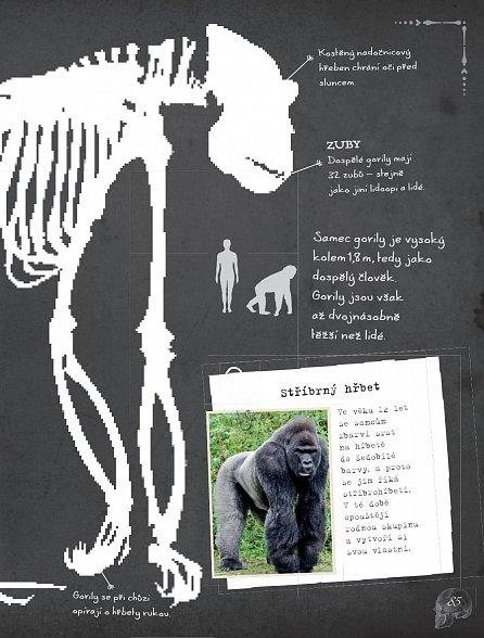 Náhled Kosti a kostry: Zvířata