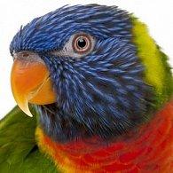 Pohlednice 3D čtverec papoušek