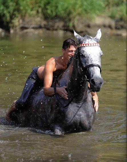 Náhled Koně pro krále