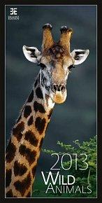 Kalendář nástěnný 2013 - Wild Animals