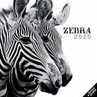 Zebra 2010 - nástěnný kalendář
