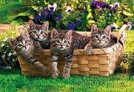 Pohlednice 3D koťata v koši