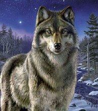 Puzzle 500 dílků Vlk