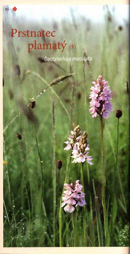 Náhled Kvetoucí rostliny - Naučte se znát nejvýznamnější druhy