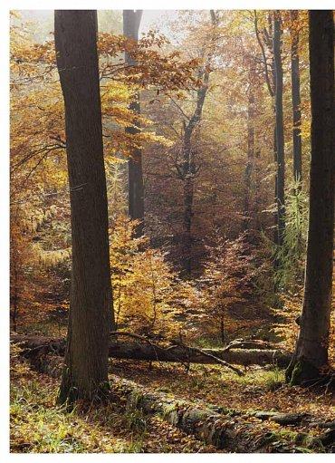 Náhled Můj první les - Trvale udržitelné a přirozené lesní hospodářství