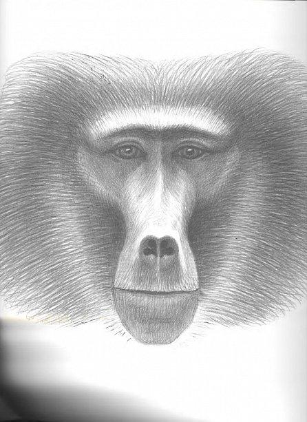 Náhled Jino taje opic