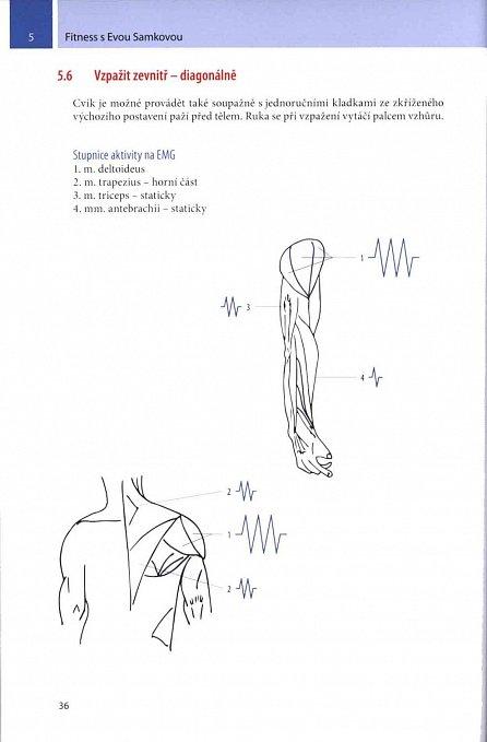 Náhled Fitness s Evou Samkovou - Účinnost cviků podle EMG