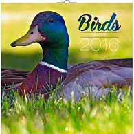 Kalendář nástěnný 2016 - Ptáci - kachny, poznámkový  30 x 30 cm