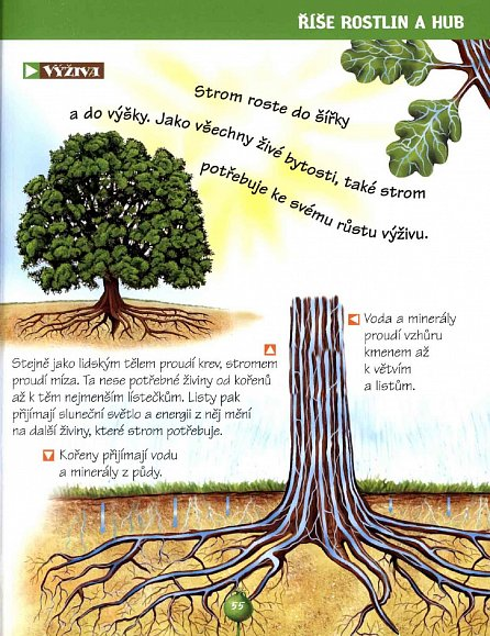 Náhled Příroda kolem nás - Dětská ilustrovaná encyklopedie