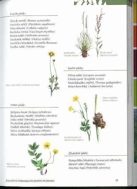 Náhled Zahrada k nakousnutí - Permakultura podle Seppa Holzera - 2. vydání
