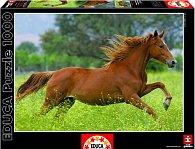 Puzzle Běh koní 1000 dílků